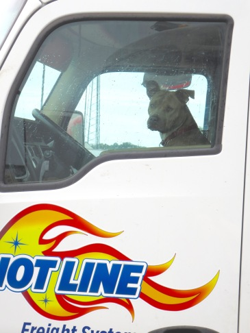 Truckers have dogs of all shapes and sizes.
