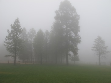 Even nearby trees were hard to see in the campground.